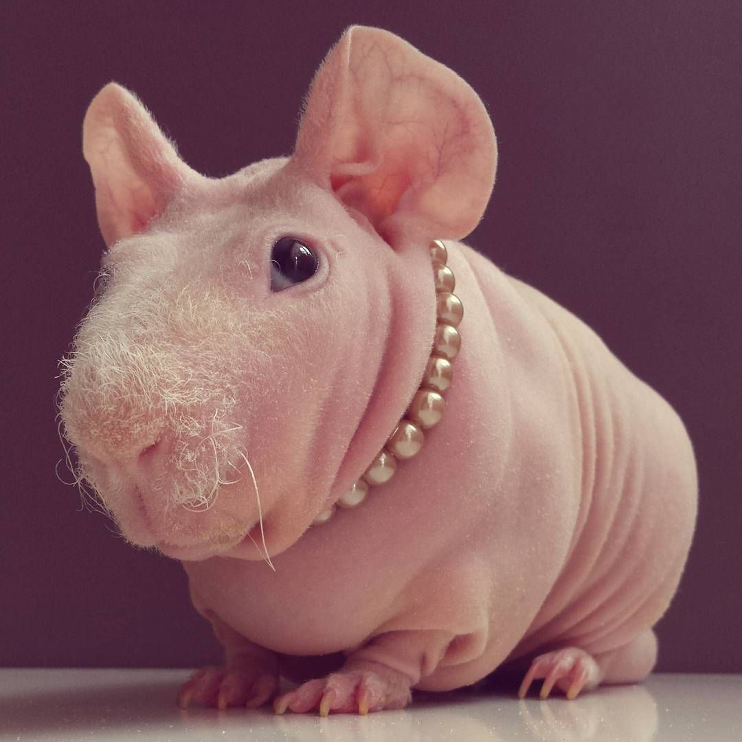 Naked Mole Rat Ron Stoppable